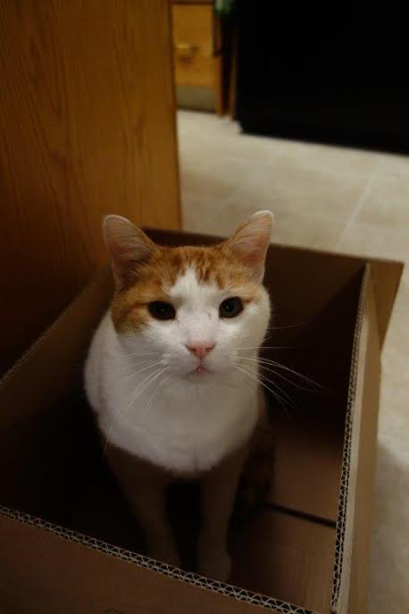 sit in a box, any box will do