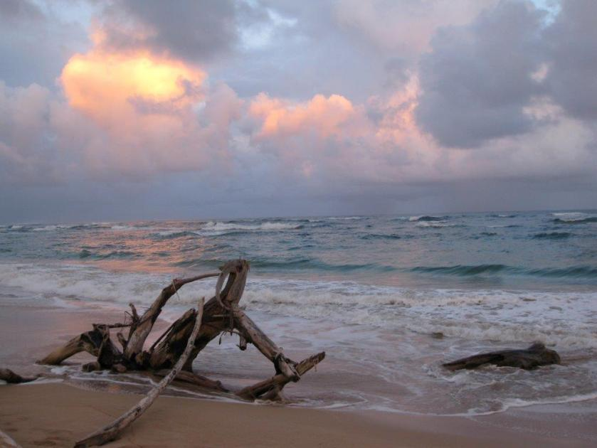 Feb Kauai 496_1