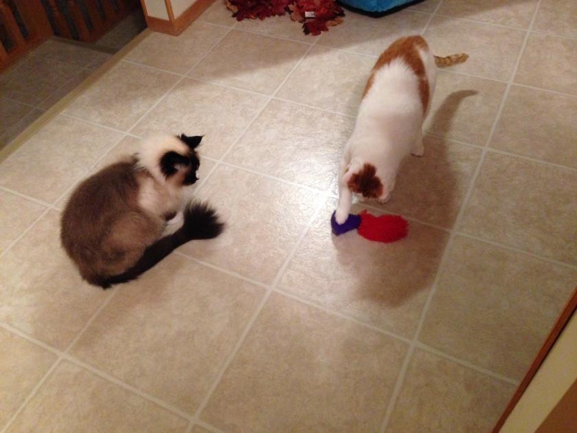 cat toy2