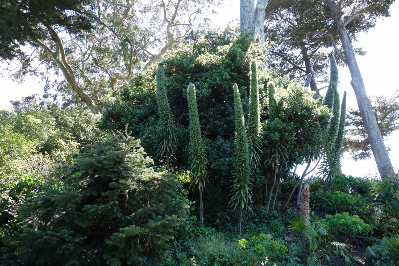 San Francisco Botanical Garden Everyday Cheer