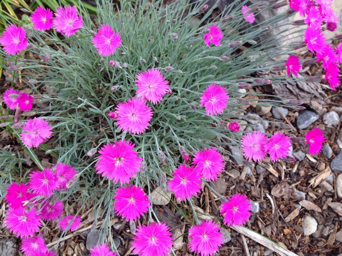 June Perennials